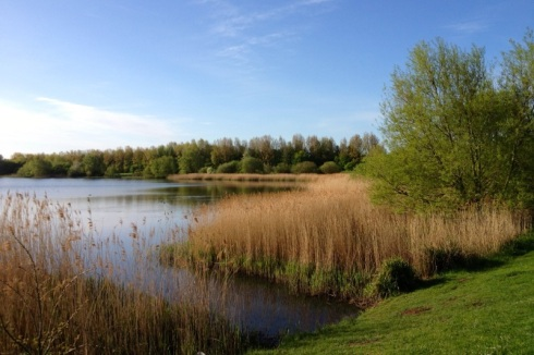 South corner of the north Willen Lake is home for the reed warblers. iPhone 4s © Gyorgy Szimuly