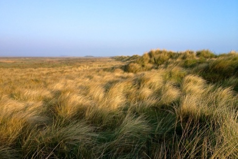 Grassy sand dunes are like natural dams. © Gyorgy Szimuly