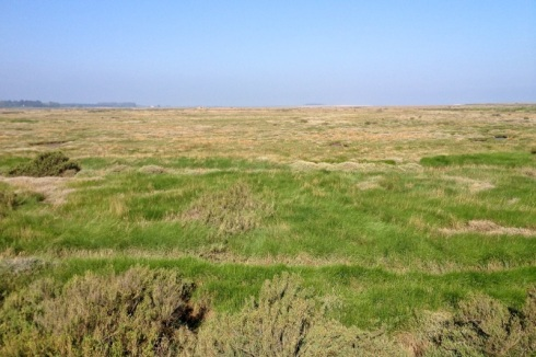 Home of Eurasian Skylarks, Meadow Pipits and other songbirds. © Gyorgy Szimuly